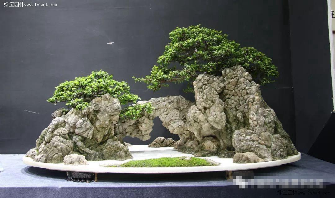 小叶白蜡_BCI国际盆景大师作品赏析 五针松 对节白蜡 榆树 山水盆景-绿宝园林