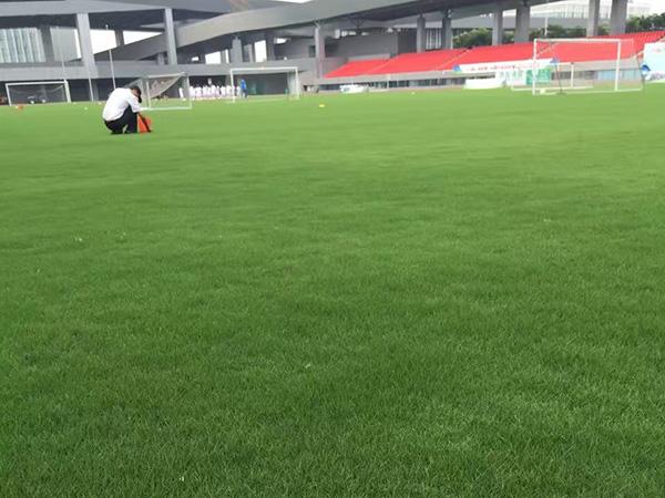 百慕大草坪球场图片