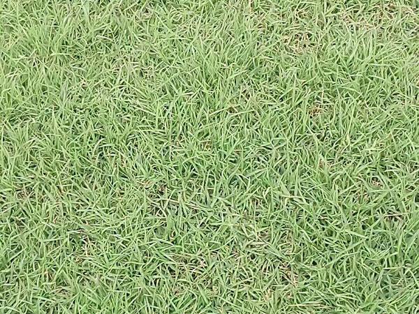 春季补种草籽什么时候合适