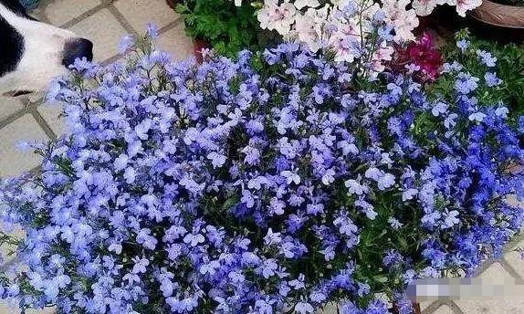 5�N植物�m合夏季�B花