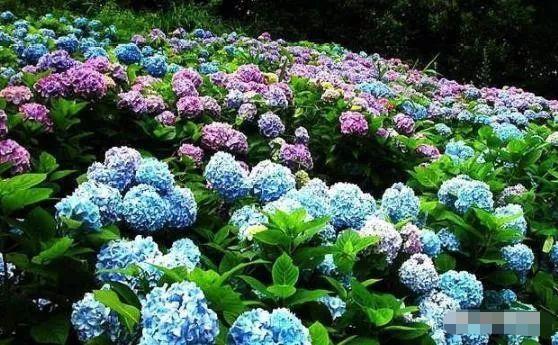 5种植物适合夏季养花